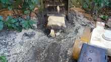 Stump Grinding in Chelsea West London.jpg