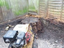Stump Grinding in Ealing West London.jpg