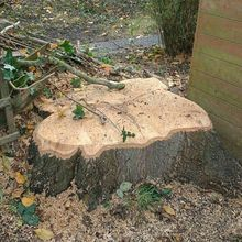 Stump Grinding in Kensil Green North West London.jpg