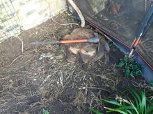 Stump Removal in Acton West London.jpg