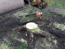 Stump Removal in Eals Court West London.jpg