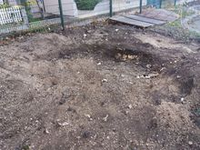 Stump Removal in Fulham, West London.jpg