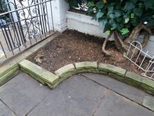 Stump Removal in Kensington West London (1).jpg