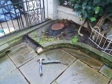 Stump Removal in Kensington West London.jpg