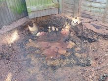 Stump Removal in Notting Hill  West London.jpg