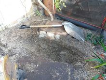 Stump Removal in Paddington West London.jpg