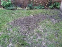 Stump Removal in  Shepards Bush West London.jpg
