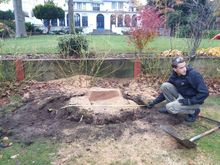 Stump Removal in St Johns Wood West London.jpg