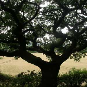 Tree Services in Barnes