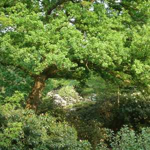 Tree Services in Chelsea