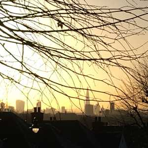 Tree Services in Killburn, Queens Park, West Hampstead