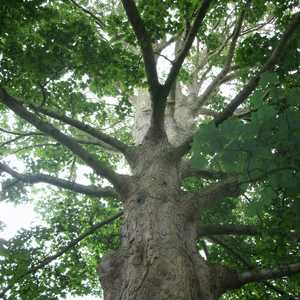Tree Services in Putney, Roehampton