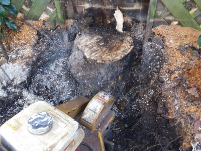 Stump removal in Hammersmith West London W6.jpg