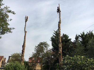 Tree removal in Wembley West london.jpg
