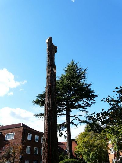 Tree surgery in Ealing, West London W5. Fell Large standind stem to ground level..jpg