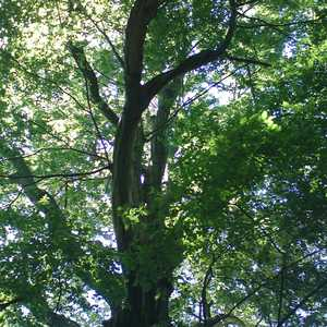 Tree Services in Acton