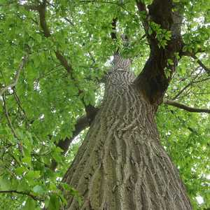 Tree Services in Clapham
