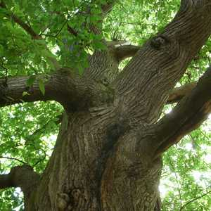 Tree Services in Westminster